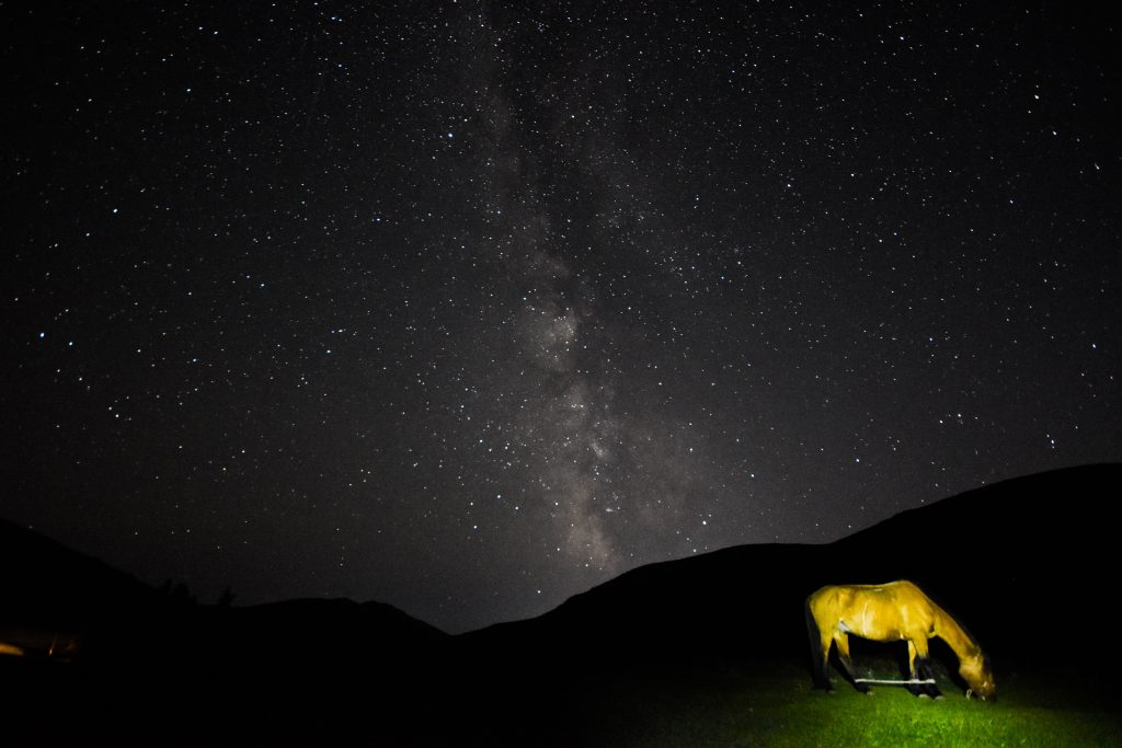 Horse under the Milky Way in Bogd Khan Uul national park in Mongolia.